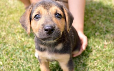 How Much Does It Cost to Adopt a Puppy?
