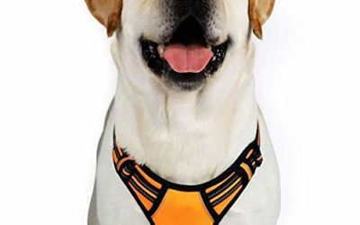 "rabbitgoo Dog Harness,No-Pull Pet Harness with 2 Leash Clips,Adjustable Soft Padded Dog Vest,Reflective No-Choke Pet Oxford Vest with Easy Control Handle for Large Breeds,Orange (XL, Chest 20.3-39.6"")"