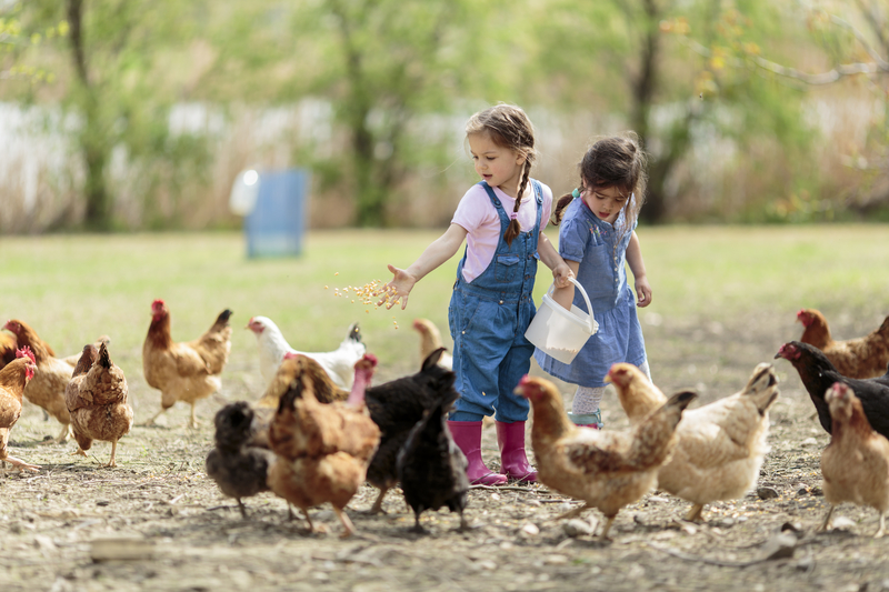 The Benefits of Raising Chickens in Your Backyard